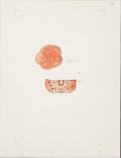 Gianfranco Baruchello, 'N. 12', 1990