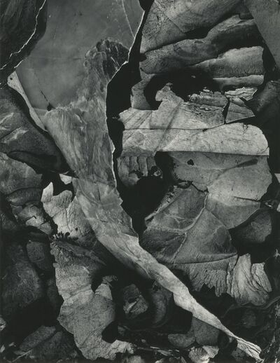 Minor White, 'Moencopi Strata, Capitol Reef, Utah', 1962