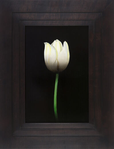 Michael Gregory, 'Untitled (tulip) ', 2014