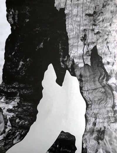 Fernanda Naman, 'Four Elements II', 2018