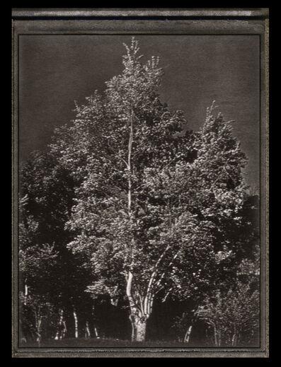 Albert Watson, 'Tree', 1978