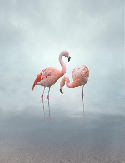 Eriko Kaniwa, 'Flamingos', 2019