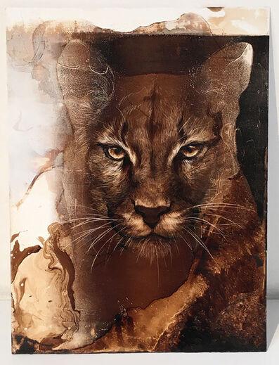 James Griffith, 'Mountain Lion #3', 2017