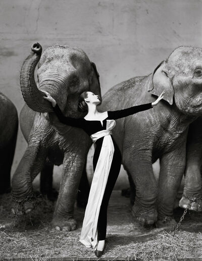Richard Avedon, 'Dovima with Elephants', 1955