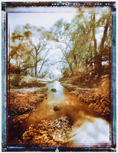 William Lesch, 'Cottonwoods & Winds - Sonoita Creek, AZ', 2001