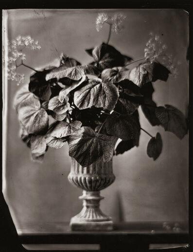 Tom Baril, 'Begonia (775)', 2003