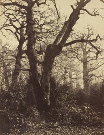 Eugène Cuvelier, 'Tree Study, Fontainebleau', 1860