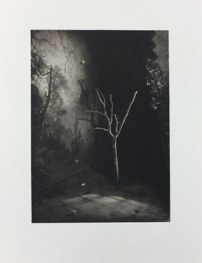 Suzanne Moxhay, 'Room with Bare Tree', 2019