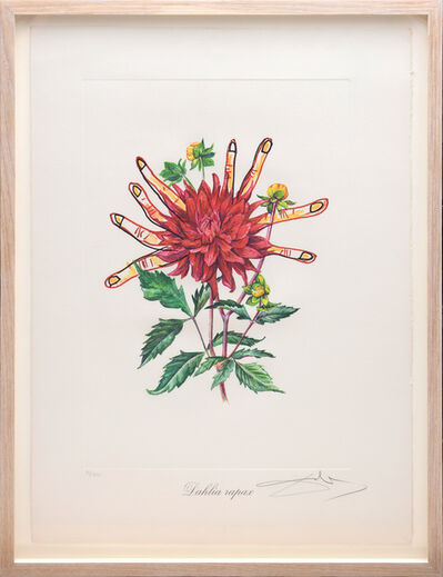 Salvador Dalí, 'Dahlia rapax (Dahlias of Dalí)(From Surrealist Flowers Portfolio)', 1972