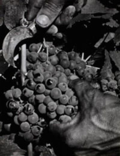 Max Yavno, 'Hand and Grapes', ca. 1950