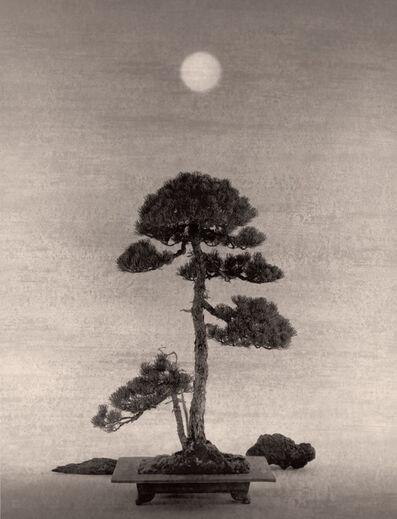 Yamamoto Masao, 'Bonsai #4032', 2020
