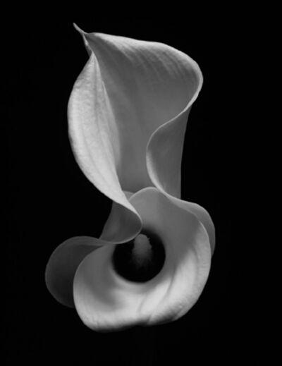 Kenro Izu, 'Still Life # 239', 1993-2009