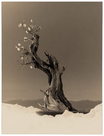 Yamamoto Masao, 'Bonsai #4023', 2019