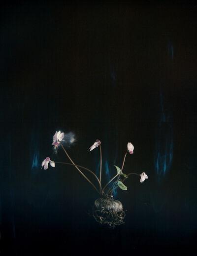 Ori Gersht, 'Black Cyclamen P03', 2018