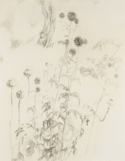 Lilian Westcott Hale, 'Study of Flowers and Pods in the Garden at Dedham', ca. 1935