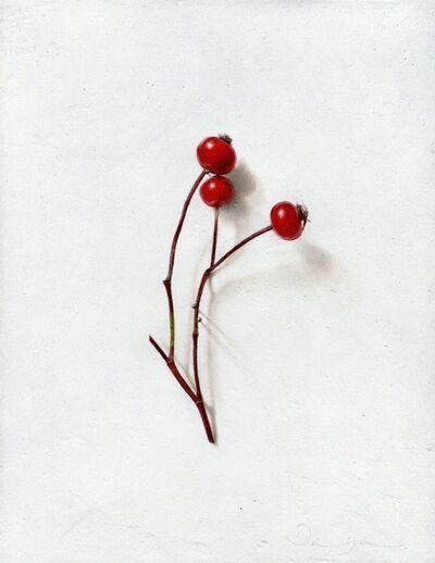 Daiya Yamamoto, 'Cynorhodon', 2019