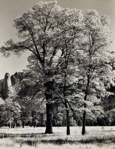 Ansel Adams, 'Autumn - Yosemite', ca. 1932