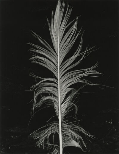 Brett Weston, 'Feather ', n/a