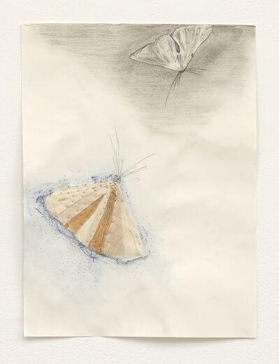 Martha Tuttle, 'Moth Drawing 2', 2020