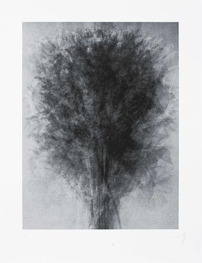 Idris Khan, 'After... Karl Blossfeldt Art Forms in Nature', 2008