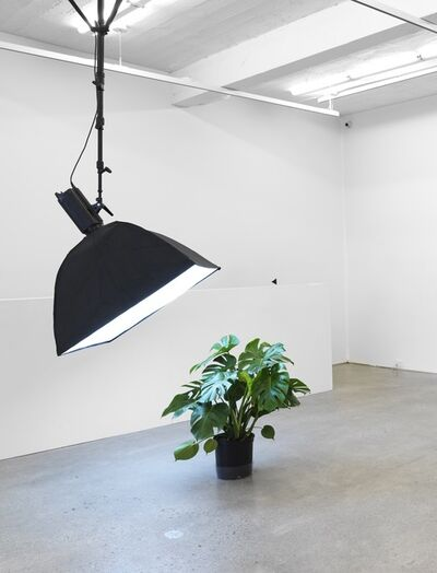 Kerry Tribe, 'Ceiling Light (Monstera deliciosa)', 2018