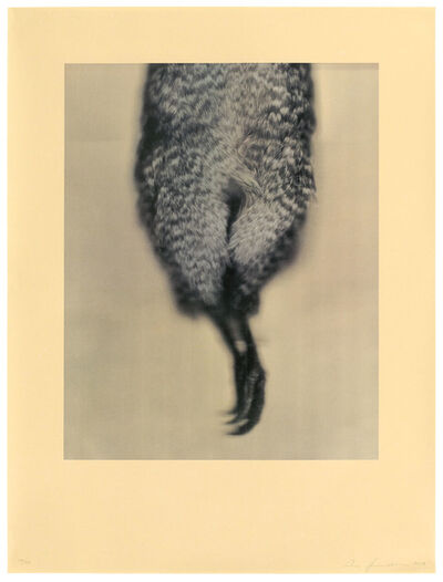 Ann Hamilton, 'Little Spotted Kiwi', 2021