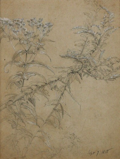 William Trost Richards, 'Wildflowers Study', 1858