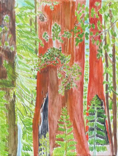 Beate Kulina, 'Redwoodtree', 2019