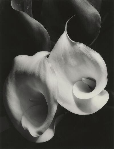 Imogen Cunningham, 'Two Callas', 1925
