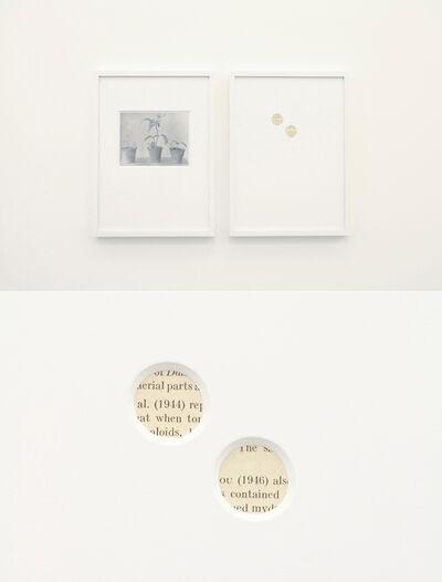 Takahiro Kudo, 'Young grafts'