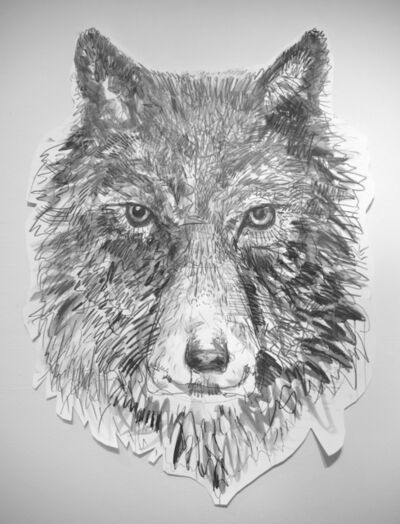 Jules Buck Jones, 'Gray Wolf (Canis lupus)', 2019