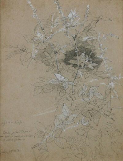 William Trost Richards, 'Leaf Study', 1858