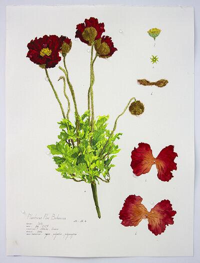 Magdalen Wong, 'Plasticus Flos Botanica  Athens IV', 2017