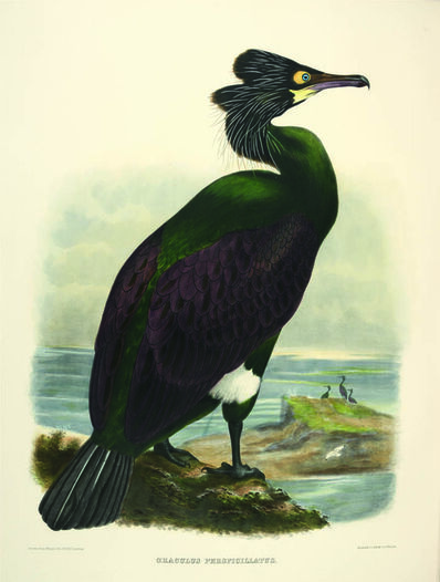 Daniel Giraud Elliot, 'The new and heretofore unfigured species of the birds of North America.', 1866