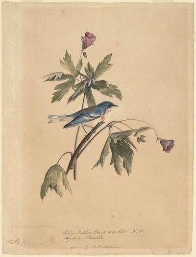 John James Audubon, 'Blue Yellow Back Warbler', 1812