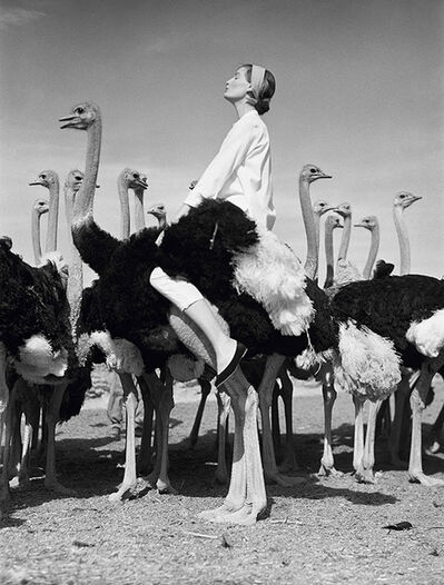 Norman Parkinson, 'Wenda and Ostriches, South Africa', 1951