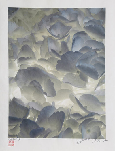 Jonathan Singer, 'Backlit White Flowers', 2012