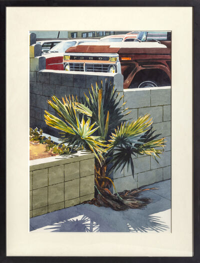 Don david, 'Palm Shrub', 1980