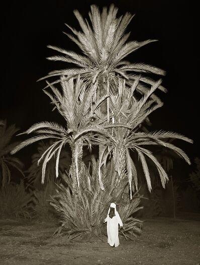 Albert Watson, 'Trees, La Palmeraie, Marrakesh', 1997