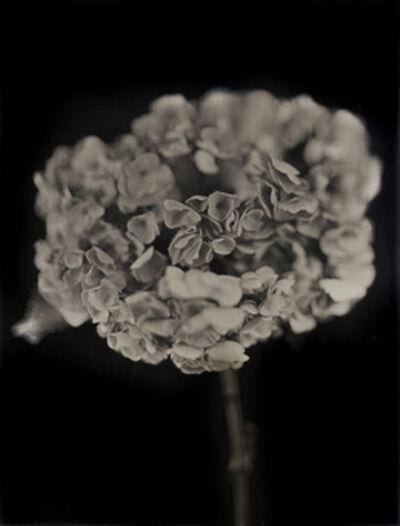 Chuck Close, 'Hydrangea', 2007