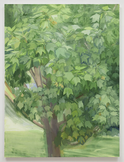 Sylvia Plimack Mangold, 'Summer Maple 2013', 2013