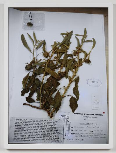 Erin Johnson, 'Solanum Plastisexum', 2020