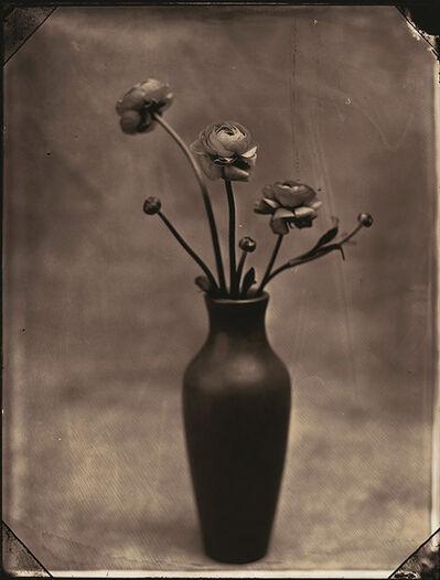 Tom Baril, 'Ranunculus', 2002