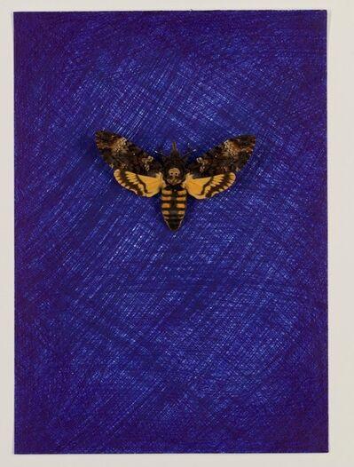 Jan Fabre, 'Doodshoofdvlinder in het Uur Blauw (VII)', 1987