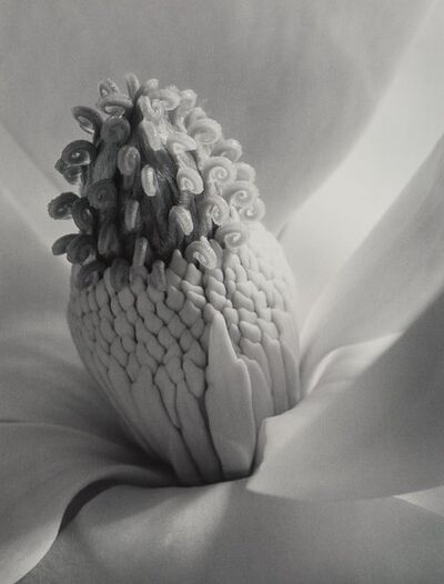Imogen Cunningham, 'Tower of Jewels', 1925