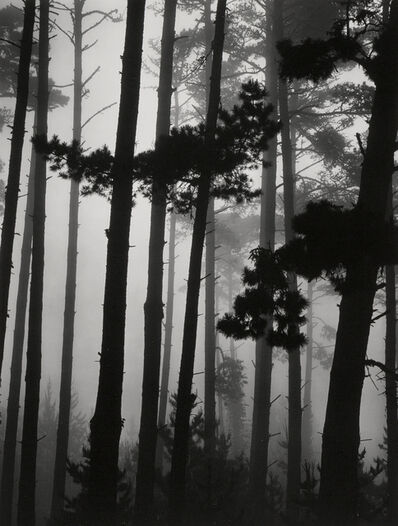 Brett Weston, 'Pines in Fog', 1962
