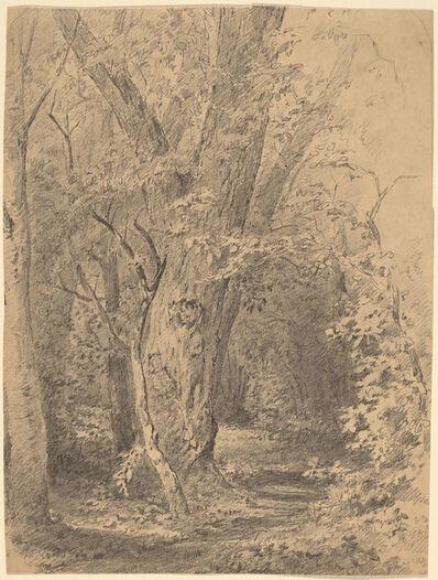 Walter Shirlaw, 'Tree and Foliage', probably c. 1873