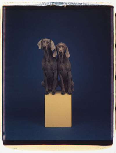 William Wegman, 'Two On', 1991