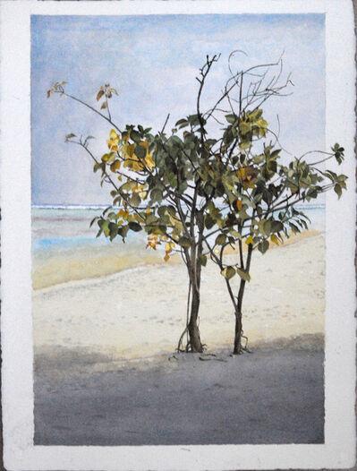 Óscar Tusquets Blanca, 'Mangles blancos en la arena', 2011