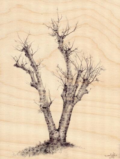 Dina Brodsky, 'Hamilton Tree 3265', 2018